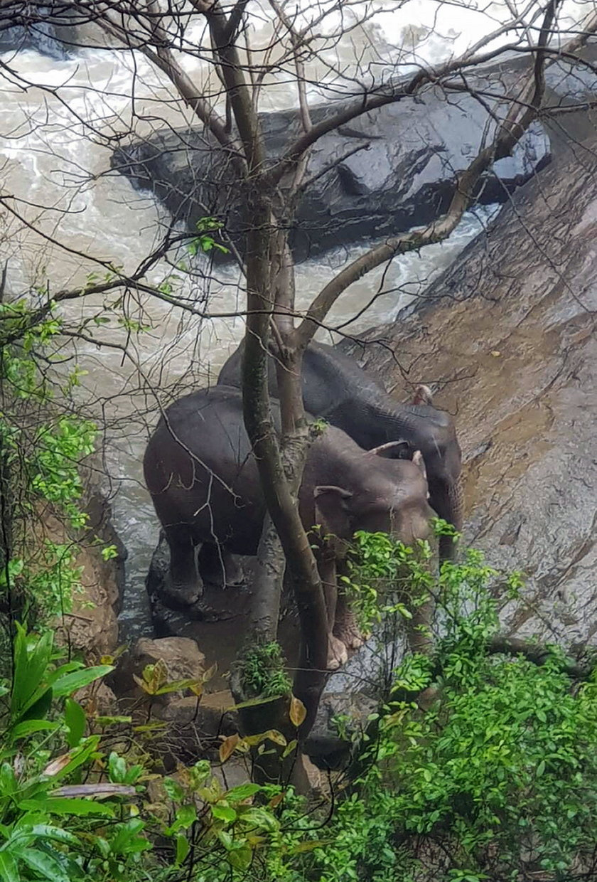 Six elephants died after falling into the waterfall in Khao Yai National Park