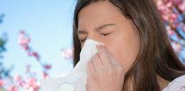 Alergicy! W tym roku znienawidzicie naturę!