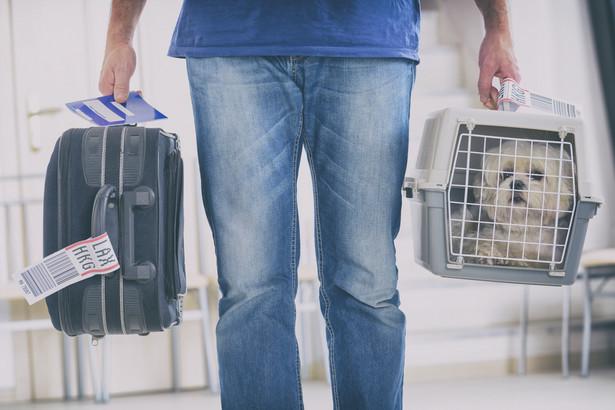Przewóz zwierząt niebędących przewodnikami dopuszcza nasz krajowy przewoźnik LOT