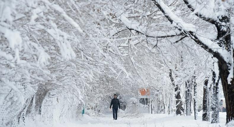 An Afghan man walks along a path under snow-laden trees.