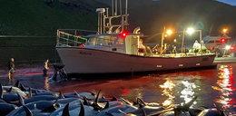 Wstrząsający widok na Wyspach Owczych. W jeden dzień wymordowali 1500 delfinów