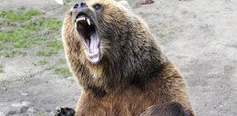 Przeżyłem atak niedźwiedzia