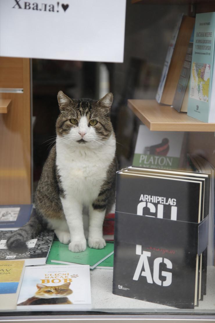 Srećko, najnačitaniji mačor u Beogradu
