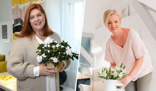 Czy Dorota Szelągowska rywalizuje z Katarzyną Dowbor? Projektantka zabrała głos