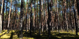 Tak źle nie było nigdy! Poważne zagrożenie w polskich lasach