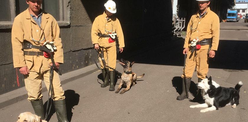 Psy podjęły trop. Ratownicy szukają górnika