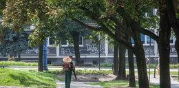 Zieleniec przy ul. Za Groblą pięknieje