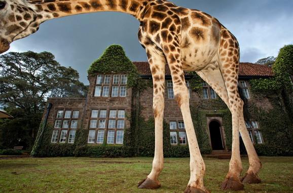 Na imanju živi više od 10 ovih životinja