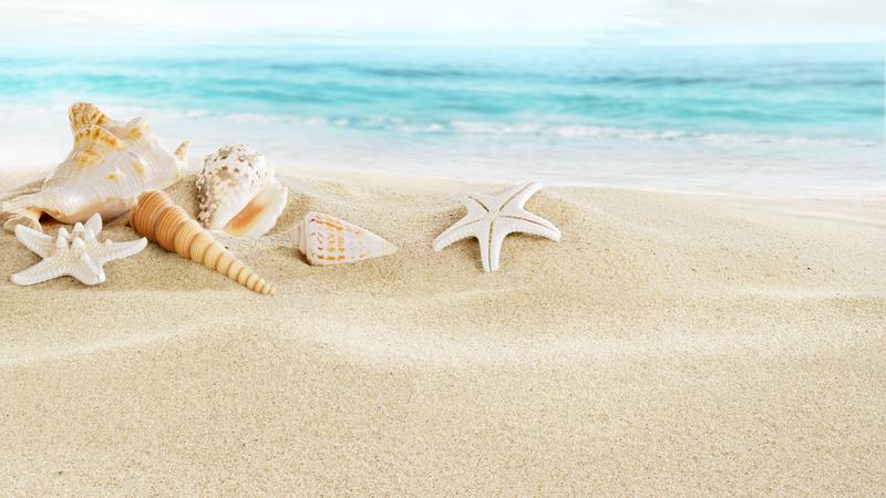 Muszle na plaży