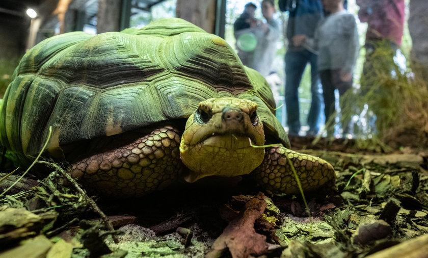 Żółwie z poznańskiego zoo mają nowy dom.