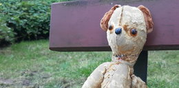 Jak miś Teddy zgubił się w zoo. Co za poszukiwania!