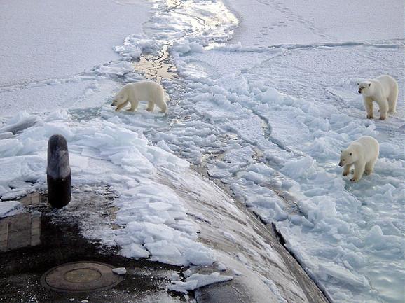 Polarni medvedi na Arktiku