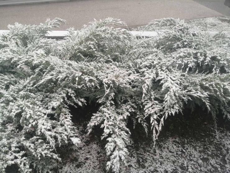 prvi sneg avala