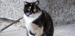 Dzieci w Lęborku wieszają koty, mordują psy