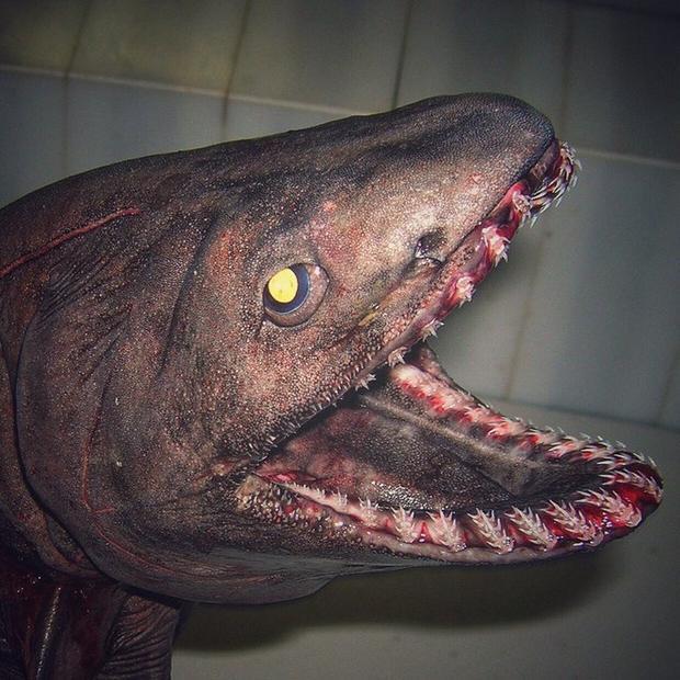 Ezelőtt 10 évvel látták az utolsó élő példányt.