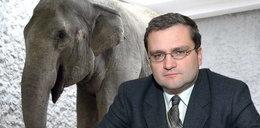Grześ atakuje słonia geja
