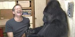 Gorylica Koko płacze po Robinie Williamsie