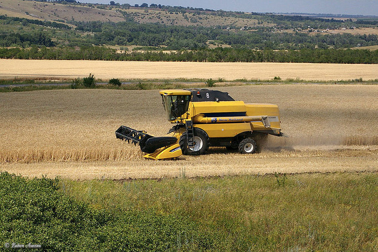 pšenica rusija rostov