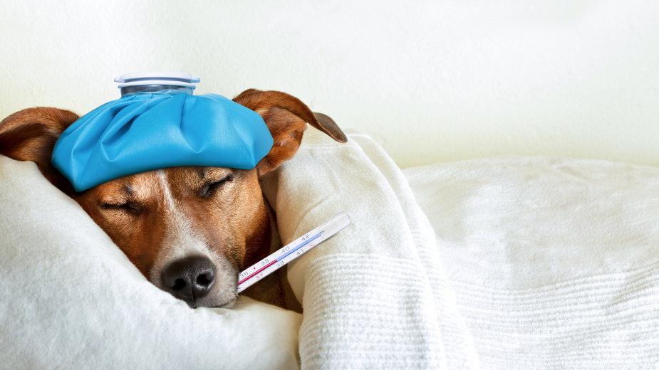 Psy mogą chorować na przeziębienie - Javier brosch/stock.adobe.com
