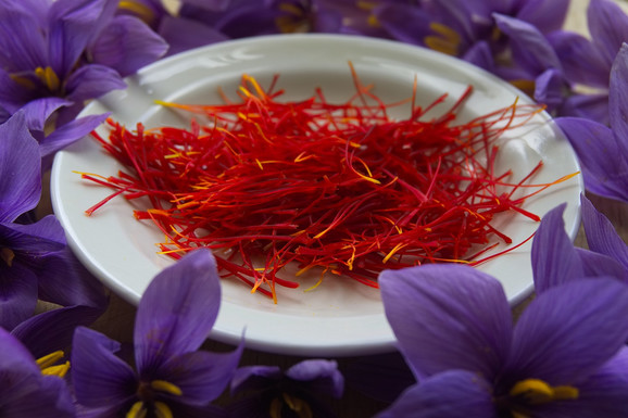 Za 1 kg začina potrebno je oko 150 000 cvetova koji se ručno beru