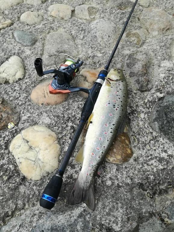 Mnogima nepojmljivo da ovolike ribe obitavaju u Đetinji