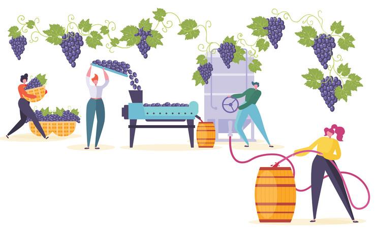 Prošle godine zabležen je manji rod za 25 do 30 odsto, ali je ubrano grožđe je bilo izuzetnog kvaliteta, kažu proizvođači