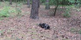 Sadysta pastwił się nad psem