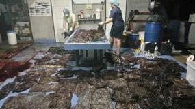 """80 worków plastikowych w brzuchu wieloryba. """"Katastrofa ekologiczna"""""""