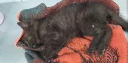 Kotki umierały w męczarniach. To nagranie łamie serce