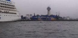 Wieloryb w Zatoce Gdańskiej. Mieszkańcy Gdyni zaskoczeni!