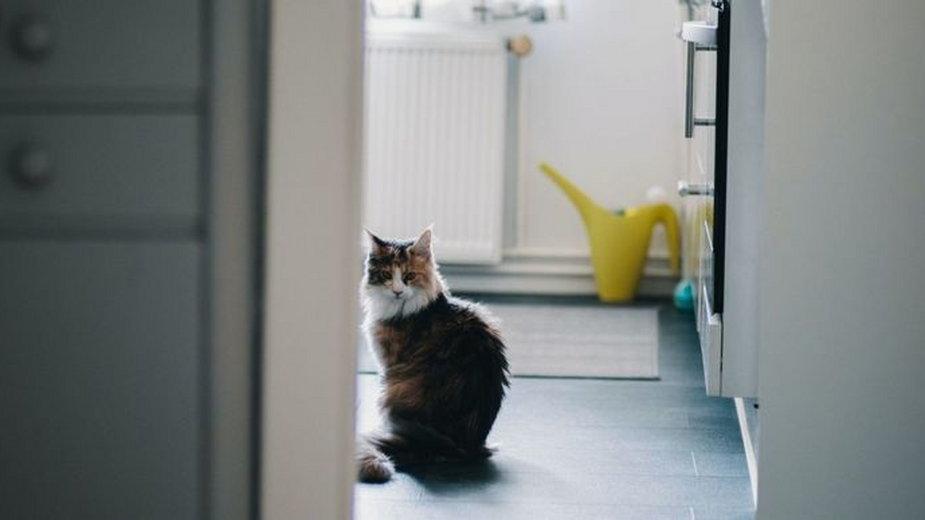 Zamknęła się w łazience i nie wpuściła kota