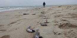 Mnóstwo okaleczonych ryb na Helu. Zrobił im to człowiek
