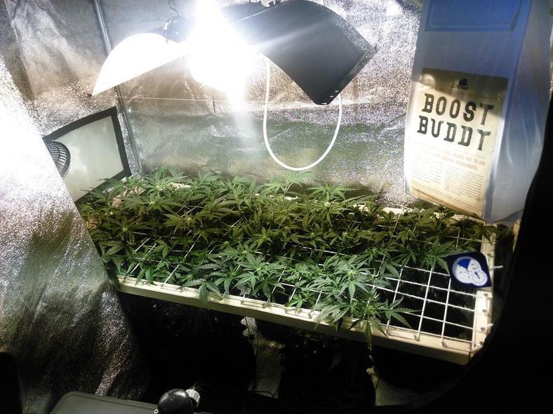 Narkotyki w namiocie
