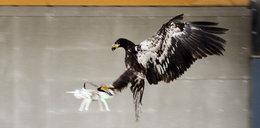 Orły wyłapią drony terrorystów!