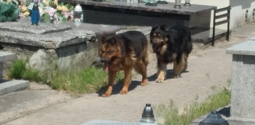 Dramat pod Kutnem. Psy pogryzły trzy osoby na cmentarzu