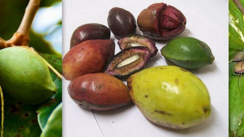 You probably didn't know the names of these popular Nigerian fruits