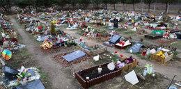 Czy w Krakowie powstanie cmentarz dla zwierząt?