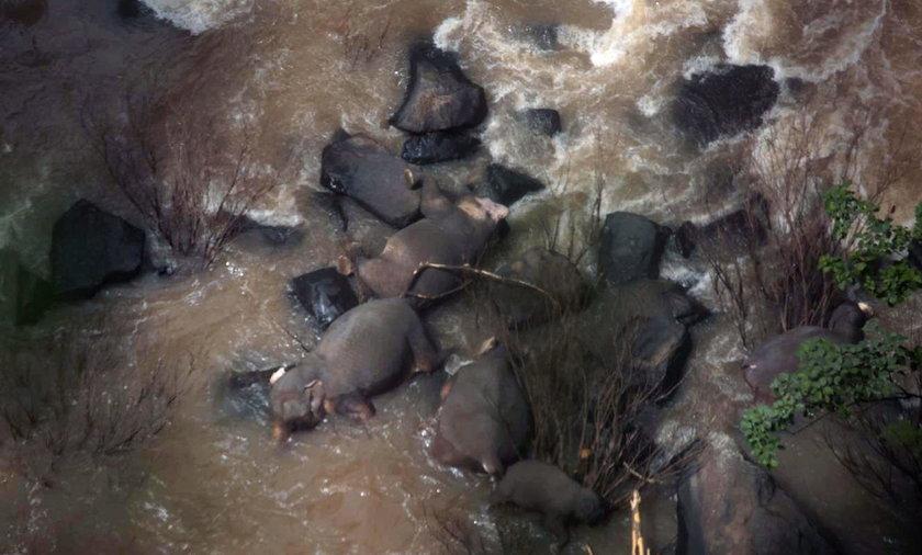 W parku narodowym w Tajlandii zginęło sześć słoni