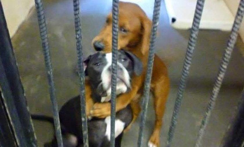 Dwa psy uratowane