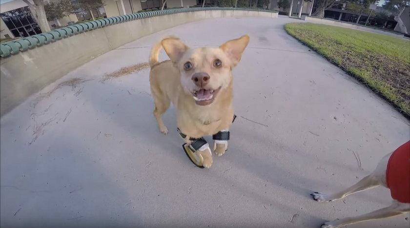 Uratowali psa od śmierci i dali mu nowe życie