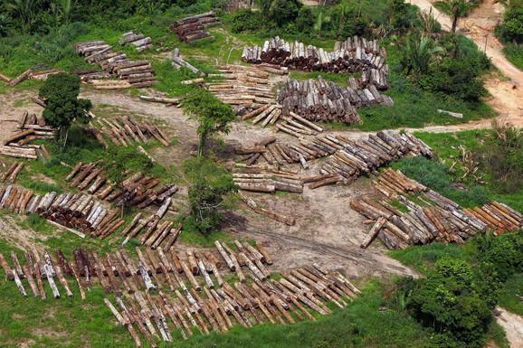 Uništenje prašume
