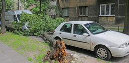 O krok od tragedii. Drzewo runęło na ulicę