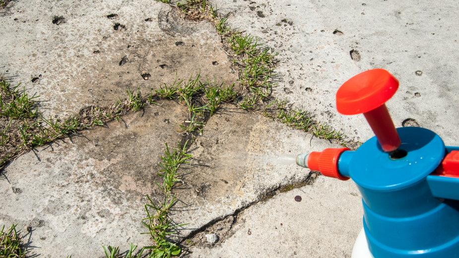 Chwasty można zwalczać bez użycia środków chemicznych - Damian Gretka/stock.adobe.com