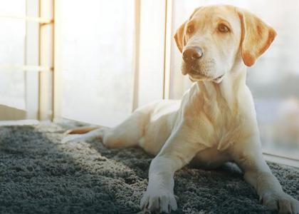 Jak Zwierzęta Mogą Pomóc W Terapii Zdrowie Newsweekpl