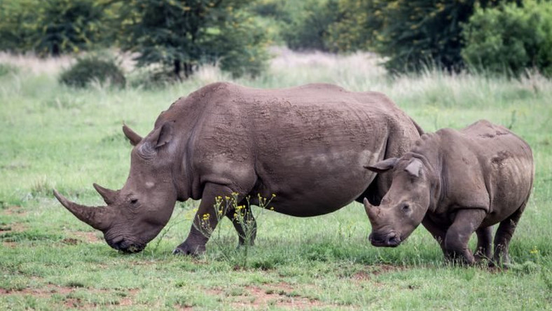 Rhinos are some of the most endangered species in the world