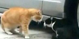 Hit netu. Tak kot wyzywa kota. Jak człowiek!