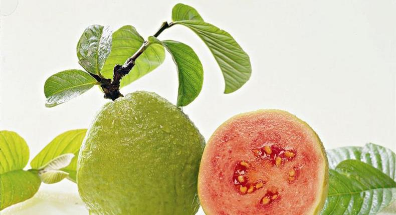 The leaves deserve a much higher priority in your meal plan than the guava fruits.