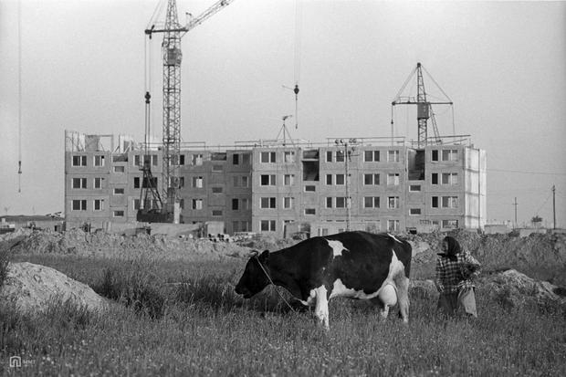 Montaż budynku mieszkalnego na tyskim osiedlu K w 1977 roku