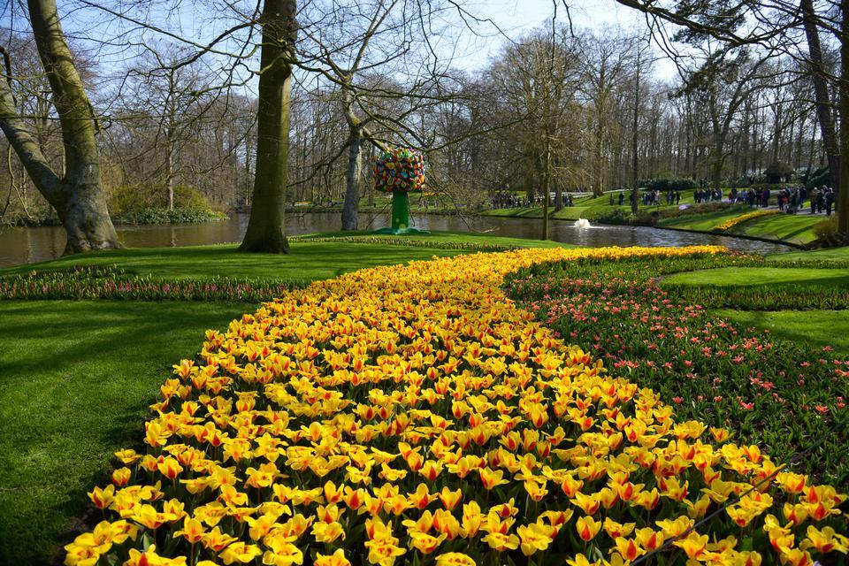 Ogród Keukenhoff