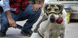 Ten pies to prawdziwy bohater! Uratował 50 osób